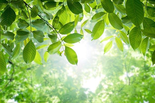 Lumière dans les arbres