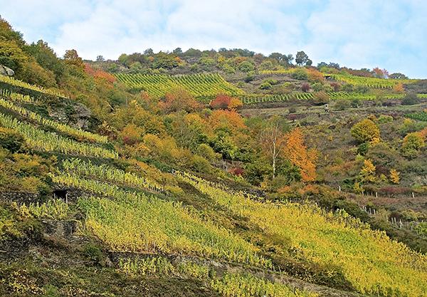 Alsace vignobles