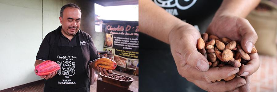 Cabosses contenant les fèves de cacao