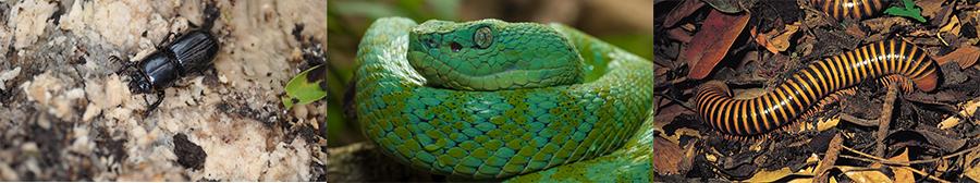 Serpent, vers et scarabé