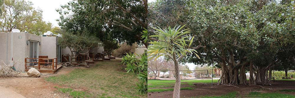 Le jardin botanique du Kibboutz Ein Guedi