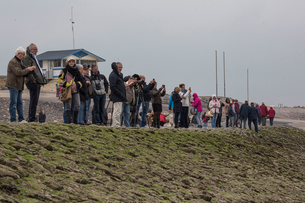 Les touristes admirant les phoques