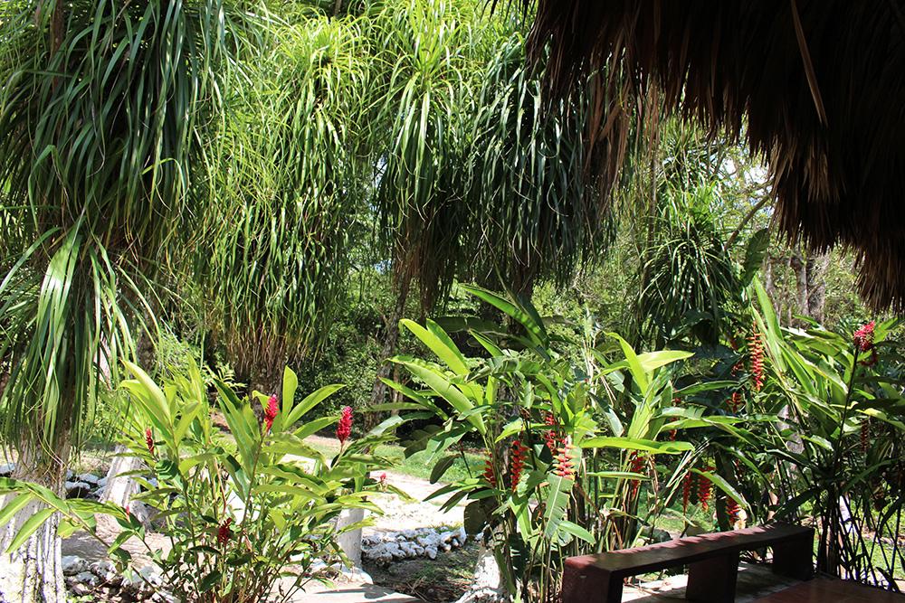 Fleurs du Parc de Tikal