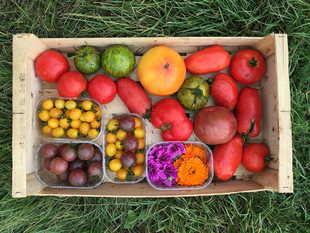 Légumes du potager bio