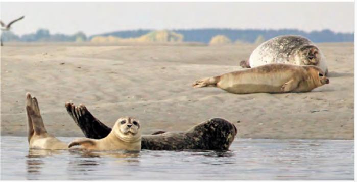 mammifères marins- photo Sarah Monnet