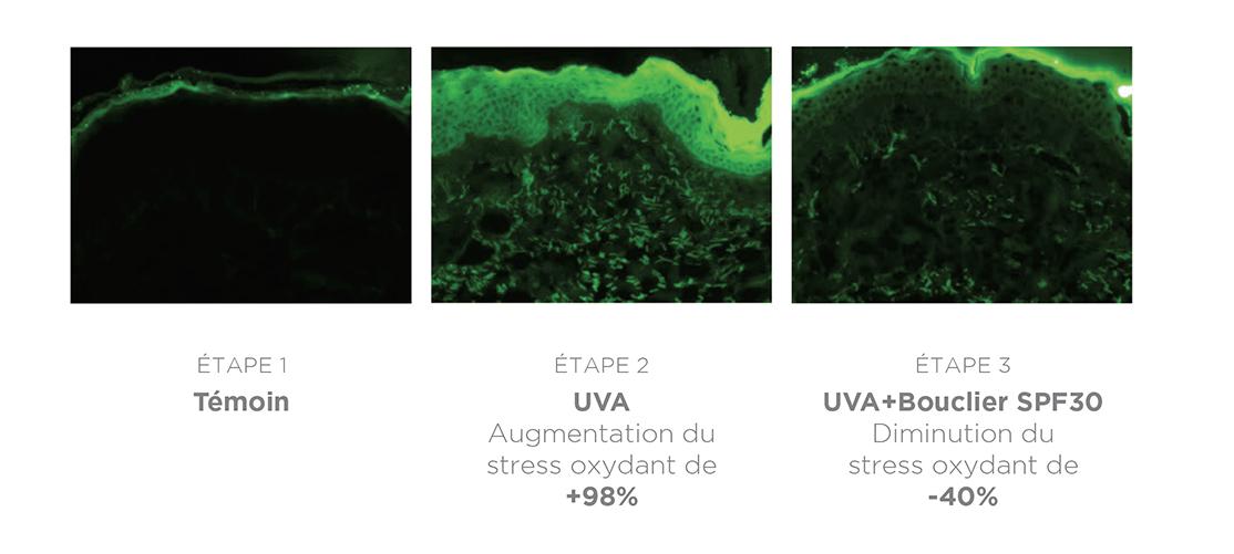 Bouclier invisible SPF30 permet de diminuer le stress oxydant de 40%, donc aide à préserver le capital jeunesse de la peau.