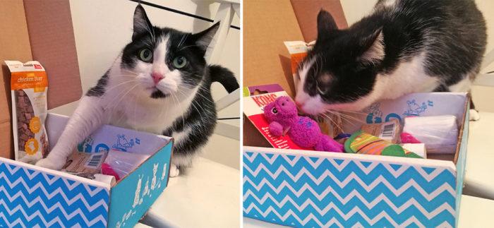 AnimalBox a lancé Miaoubox, un coffret contenant un assortiment de six produits (jouets, accessoires, produits d'hygiène, friandises…) pour le chat.