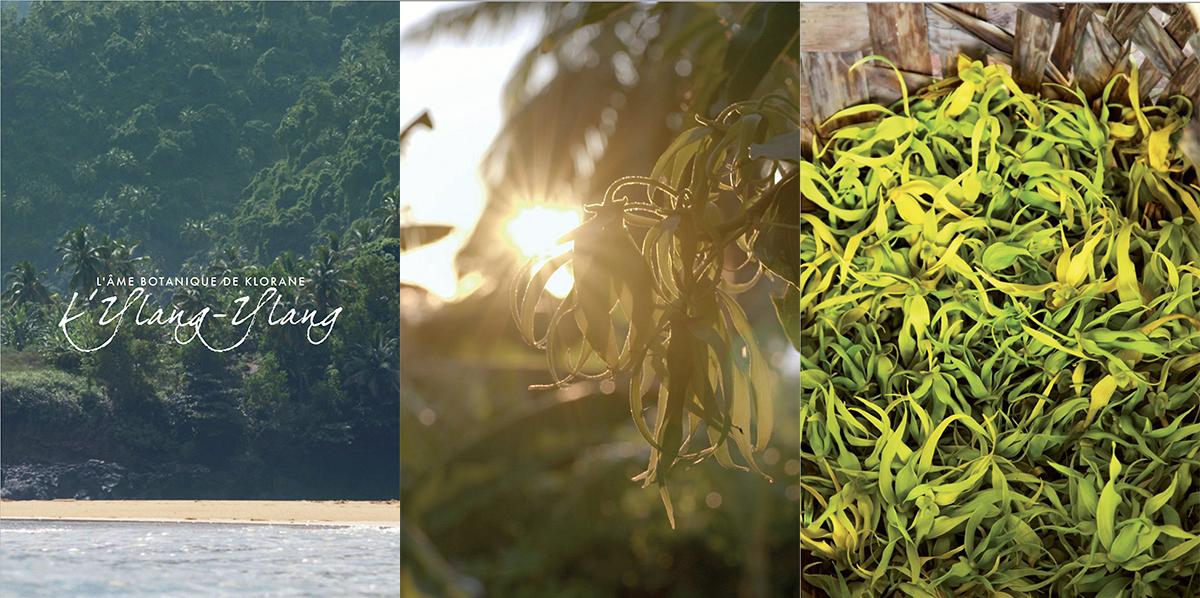 L'Ylang-Ylang Cananga odorat