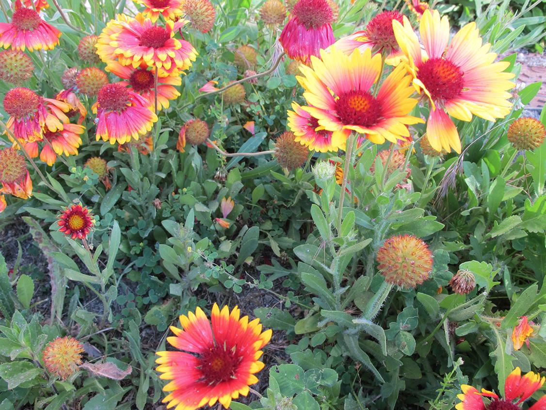 Fête des plantes à Bagnoles de l'Orne