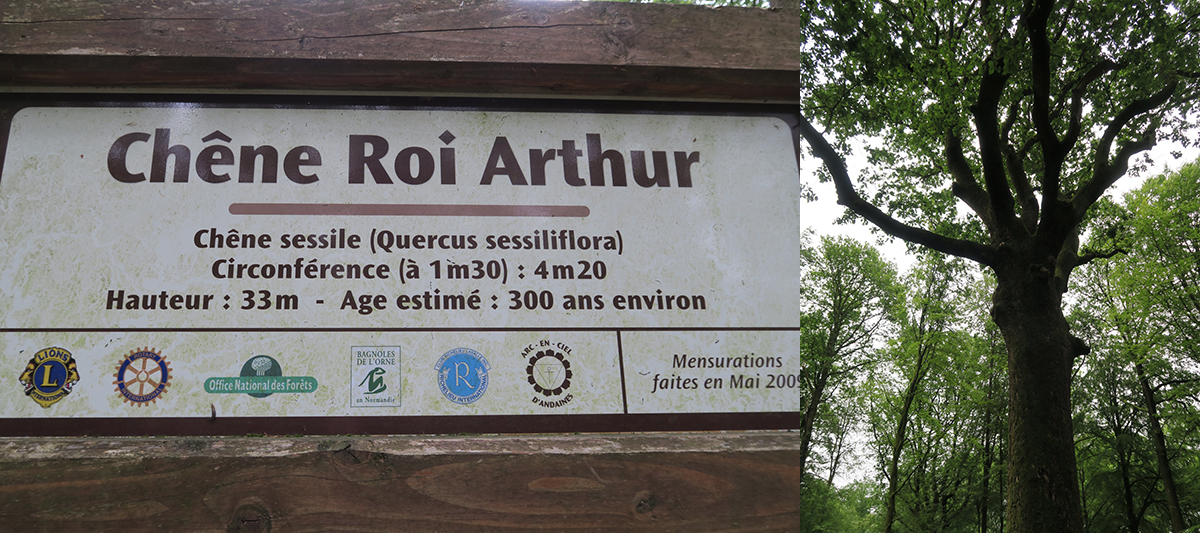 Bagnoles de l'Orne : Forêt des Andaines