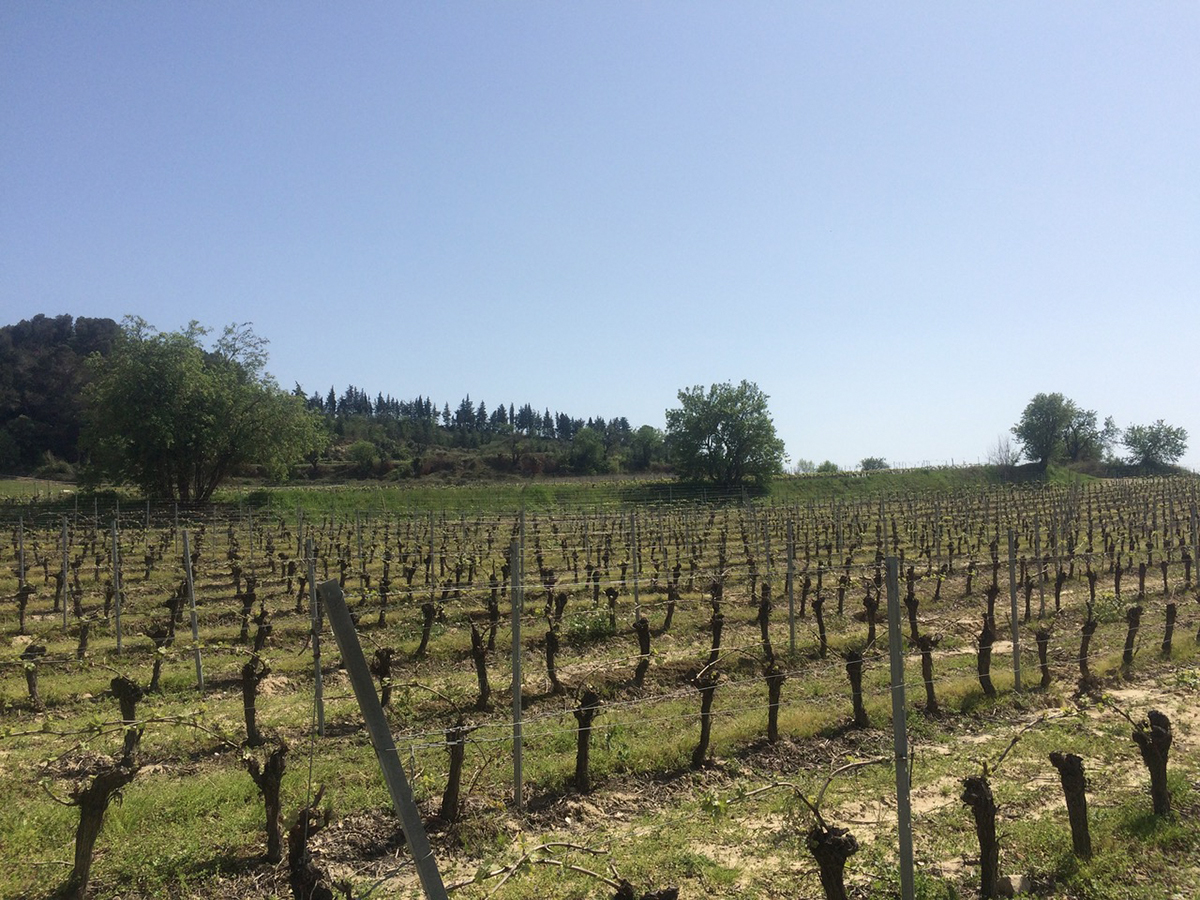 Vignobles du Château St Martin des Champs