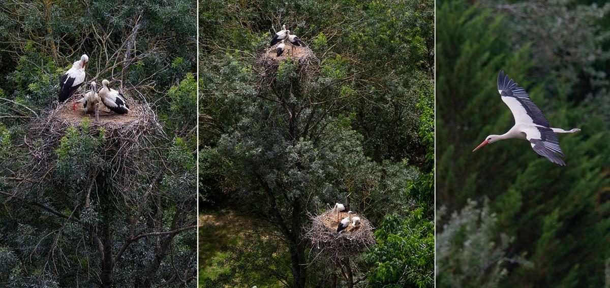 Au sommet de la tour on surplombe le vol des cigognes et on a une place privilégiée par voir ce qui se passe dans les nids qu'elles ont construits sur les arbres environnants.