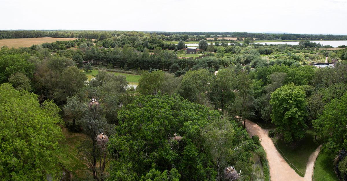 Un panorama exceptionnel au-dessus de la canopée.