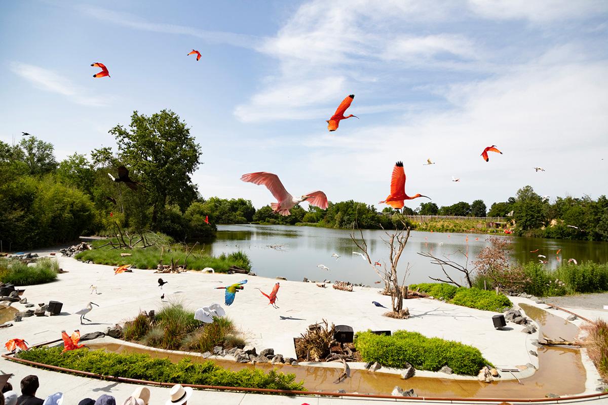 Un des moments le plus fort du spectacle. Des oiseaux, colorés et majestueux,arrivent en nombre de l'autre côté de l'étang.