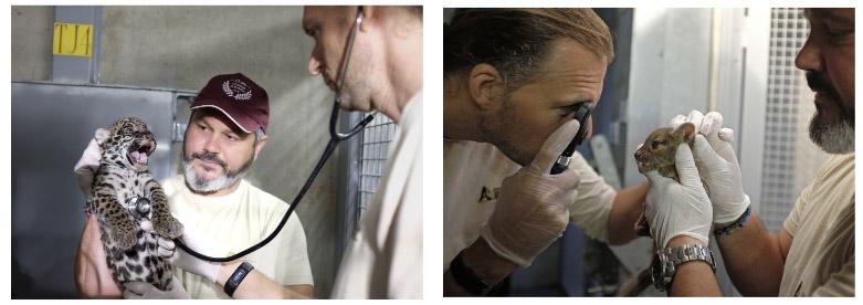 examen vétérinaire effectué le 27 juillet