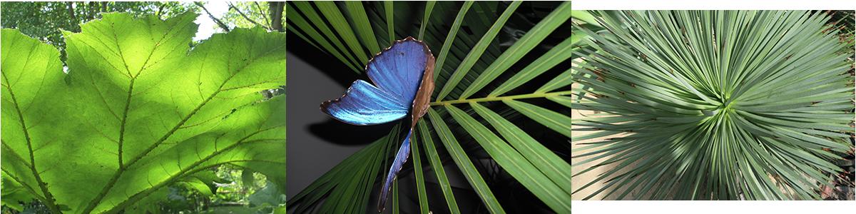 Feuille et Papillon