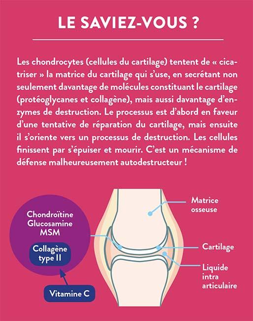 Explications sur le cartilage