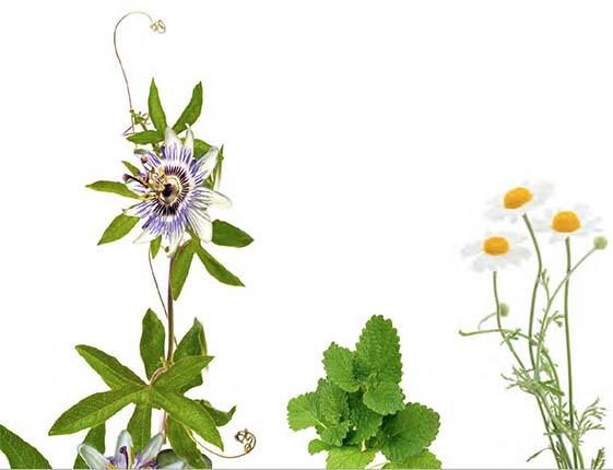 Plantes de la composition Méla-Sommeil
