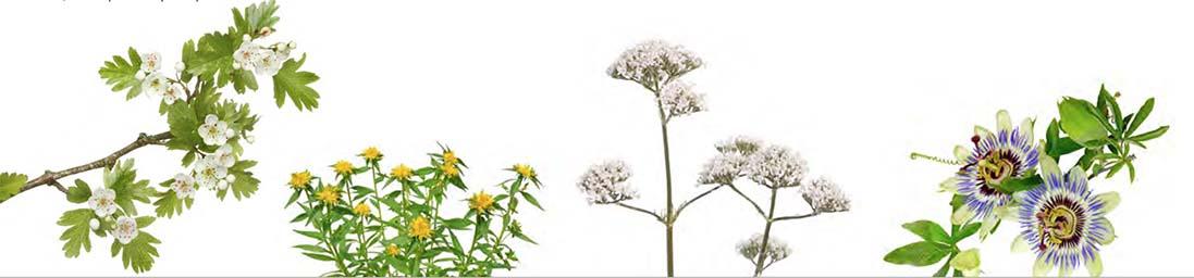 Plantes dans la composition de Phyto-Stress