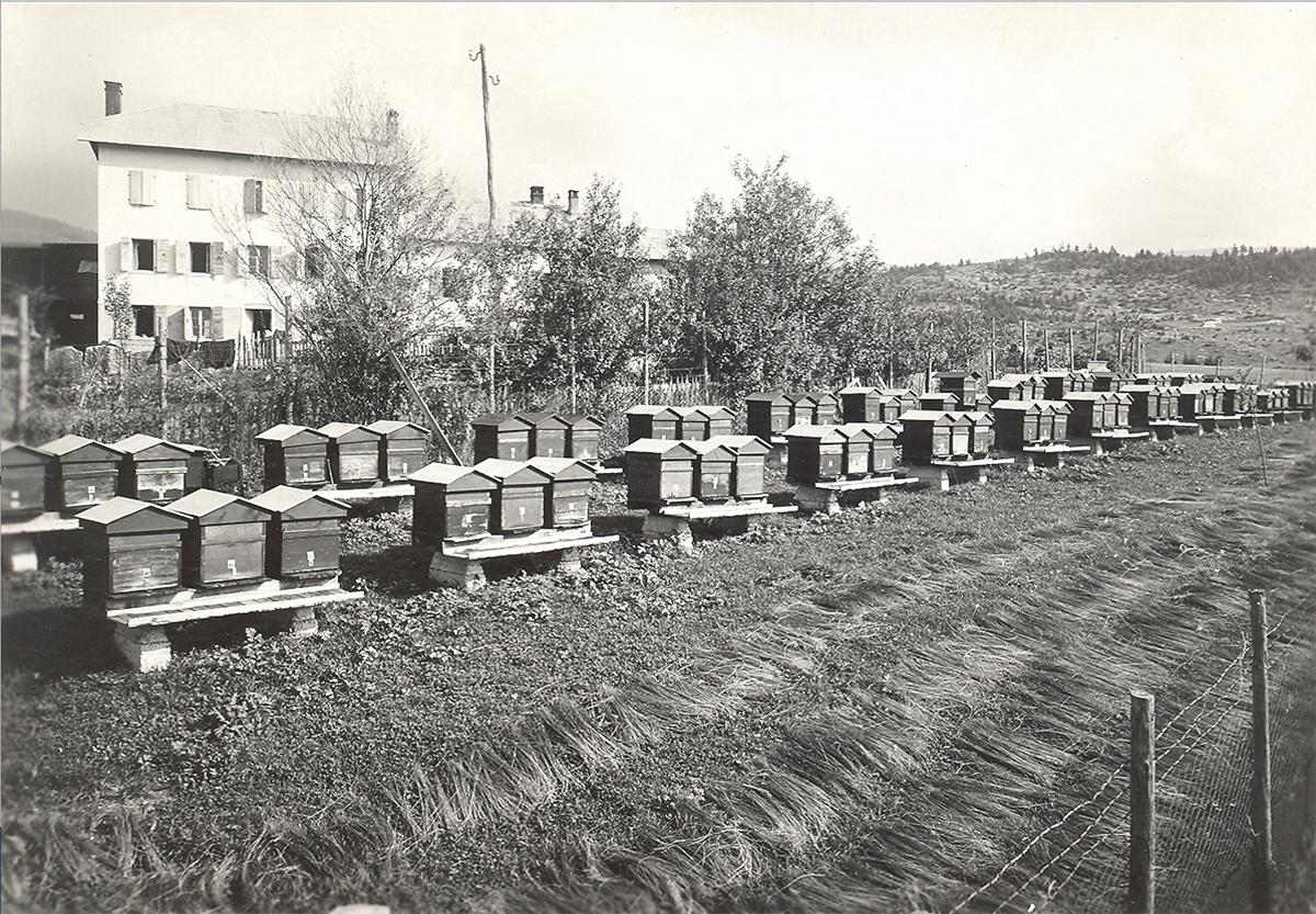 Rangées de ruches