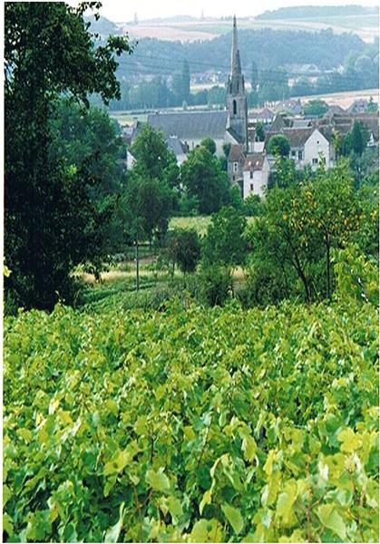 Vendomois Vignes