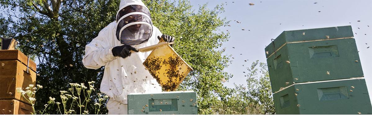 Miel et apiculteur