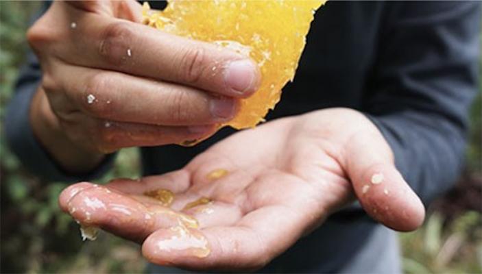Pain de miel