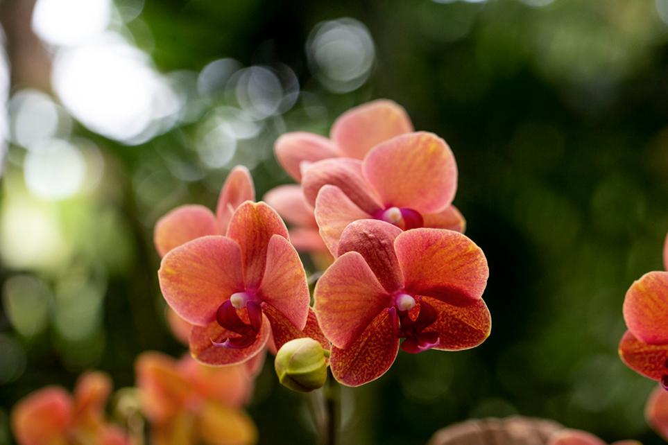 Orchidées : sublime expo dans les Grandes serres du Jardin ...