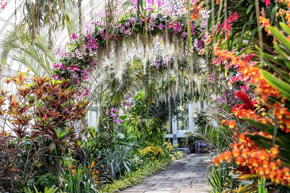 Orchidées au New York Botanical Garden