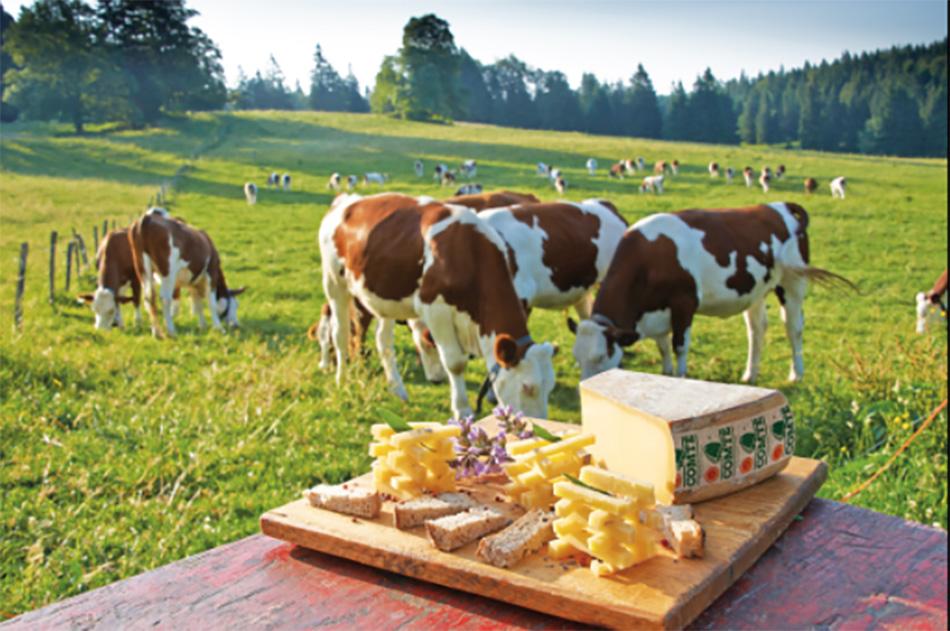 Vaches et fromages du Jura