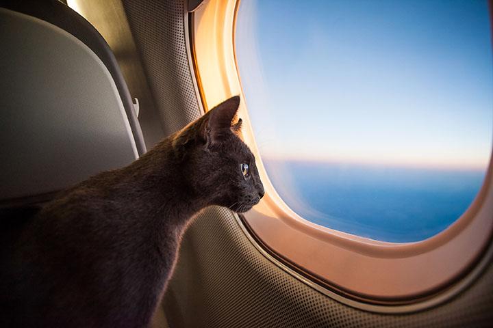 Quand vos animaux de compagnie rêvent de voyager en jet privé…