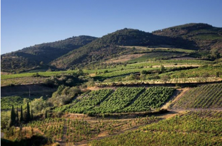 Vignes de Cascatel