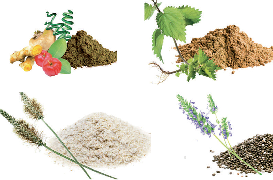 Plantes Herbesan