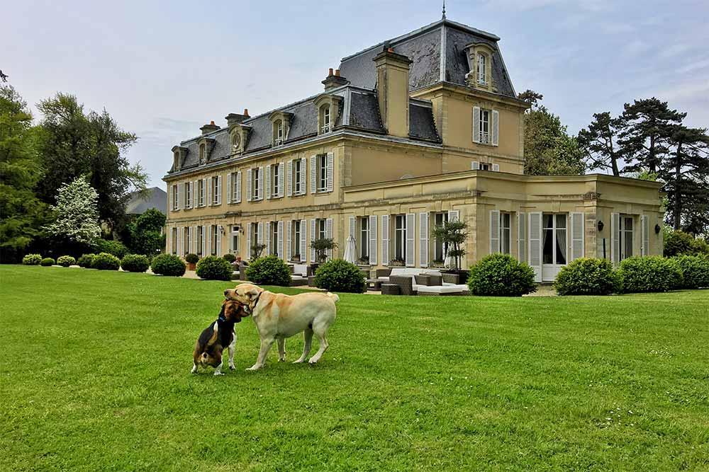 Chiens qui jouent dans le parc du Château la Chenevière