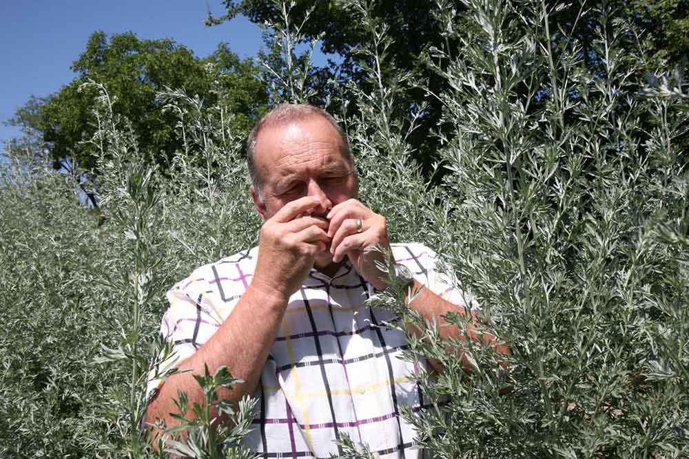 Alain Robert dans un champs d'Absinthe
