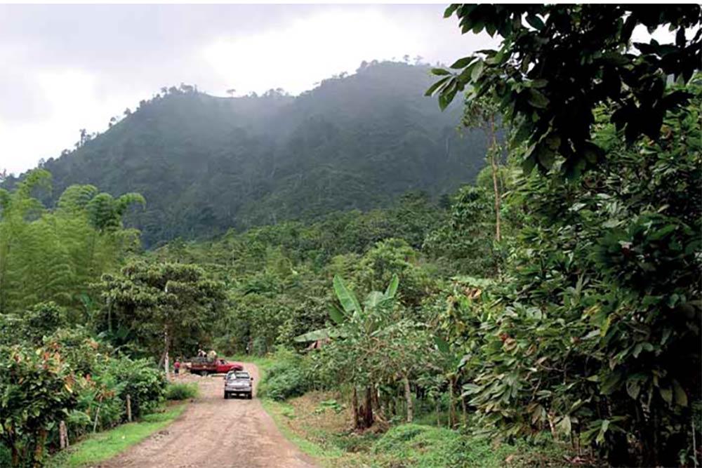 Plantation de cacaoyers