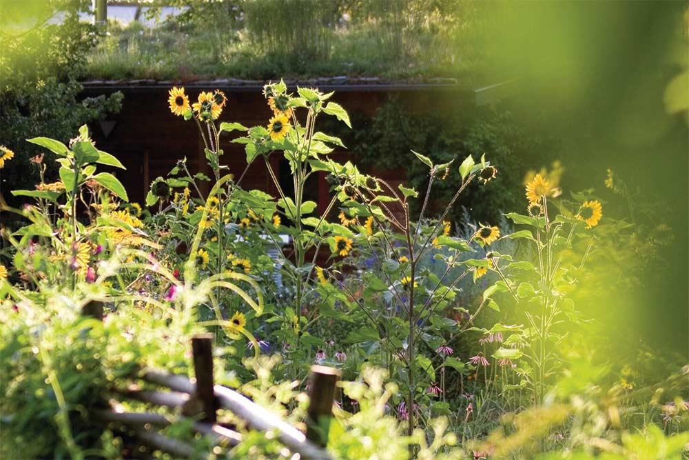 Plantes Dr Hauschka
