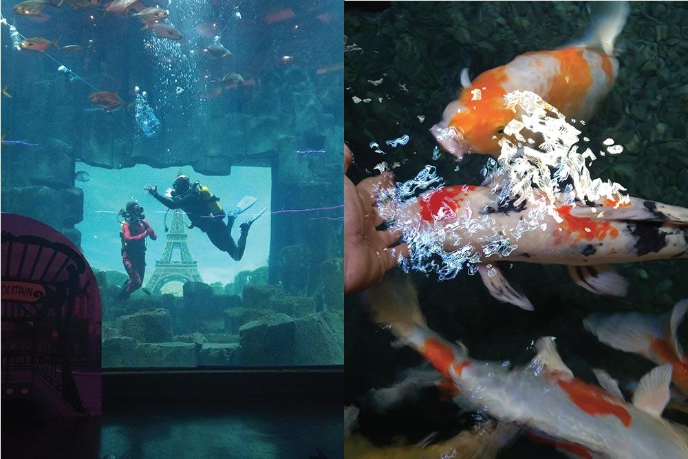 Miraculous Plongeurs