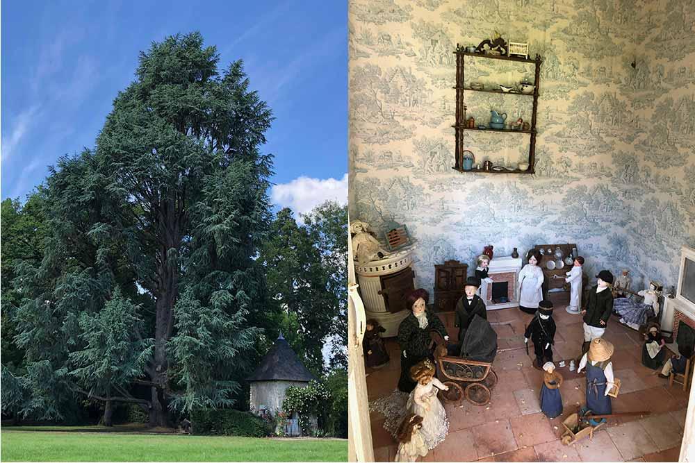 Château de Troussay : un magnifique cèdre et le pavillon musée de poupées