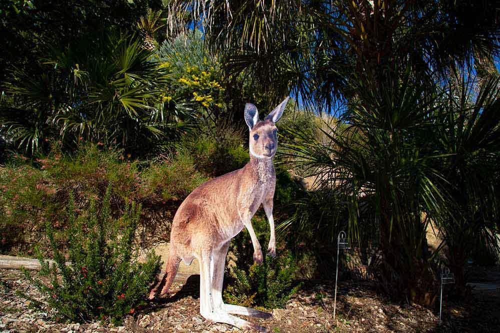 Hommage à l'Australie dans le Jardin Gonsalez