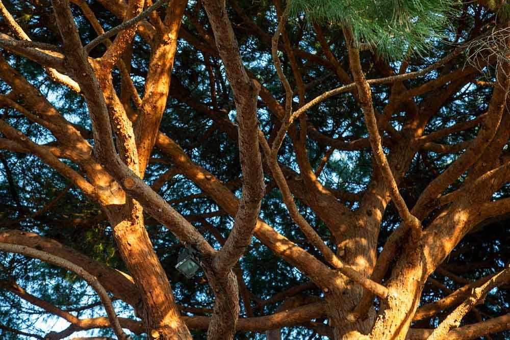 mimosa - Un voyage à travers tous types d'arbres et de paysages…