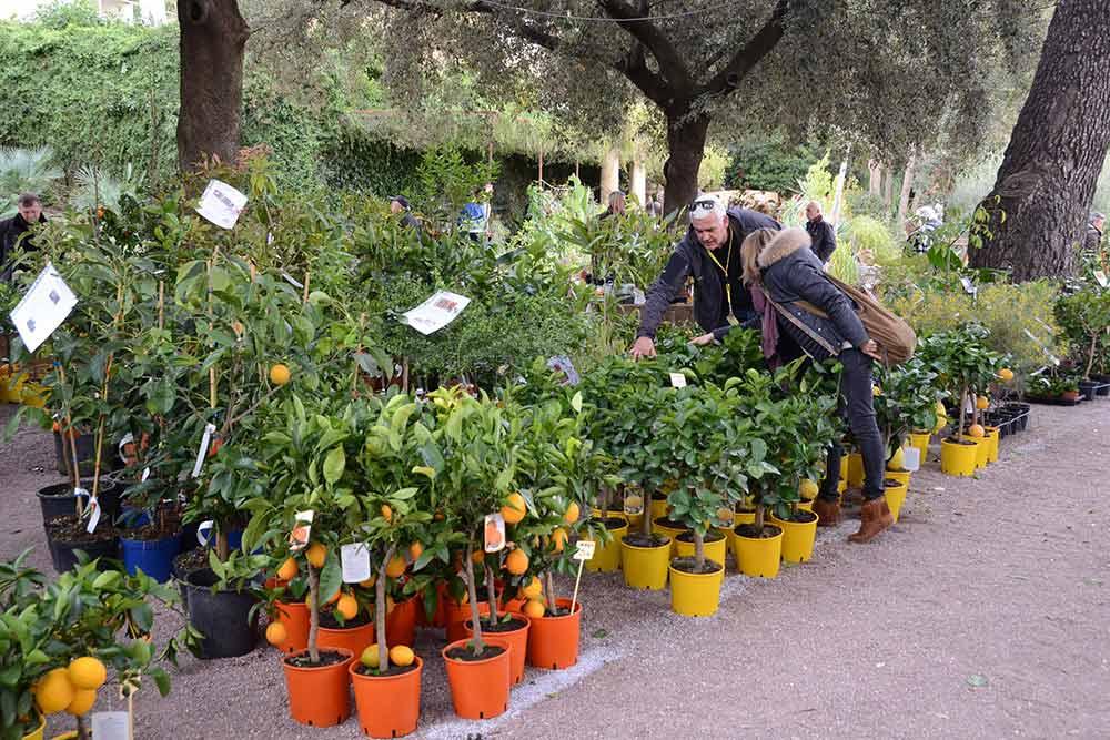 mimosa - Mimosalia, le bon endroit pour les collectionneurs et amateurs de plantes. © Office du Tourisme de Bormes-les-Mimosas.