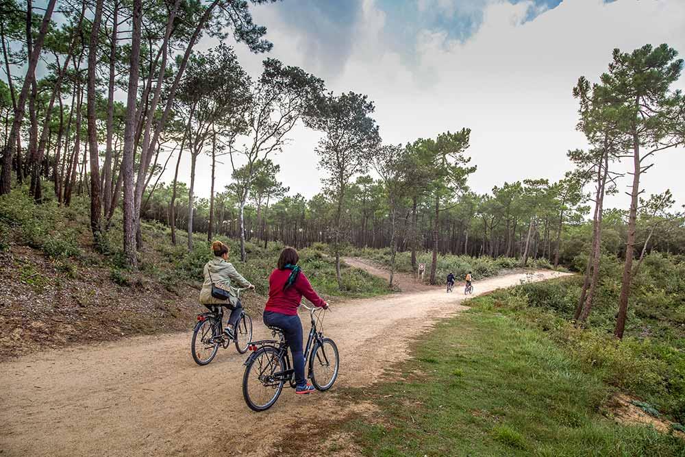 Un moment de paix et de tranquillité: la traversée de la forêt de pins à vélo.