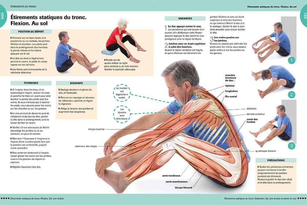 Gymnastique - Etirements statiques du tronc