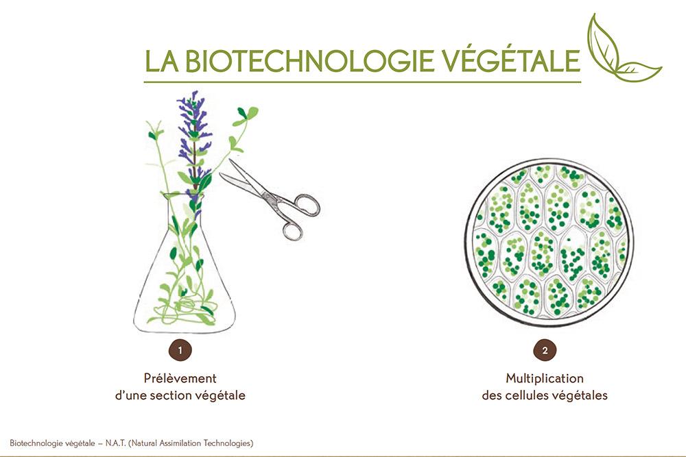Cosmétique Végétale - La Biotechnologie Végétale