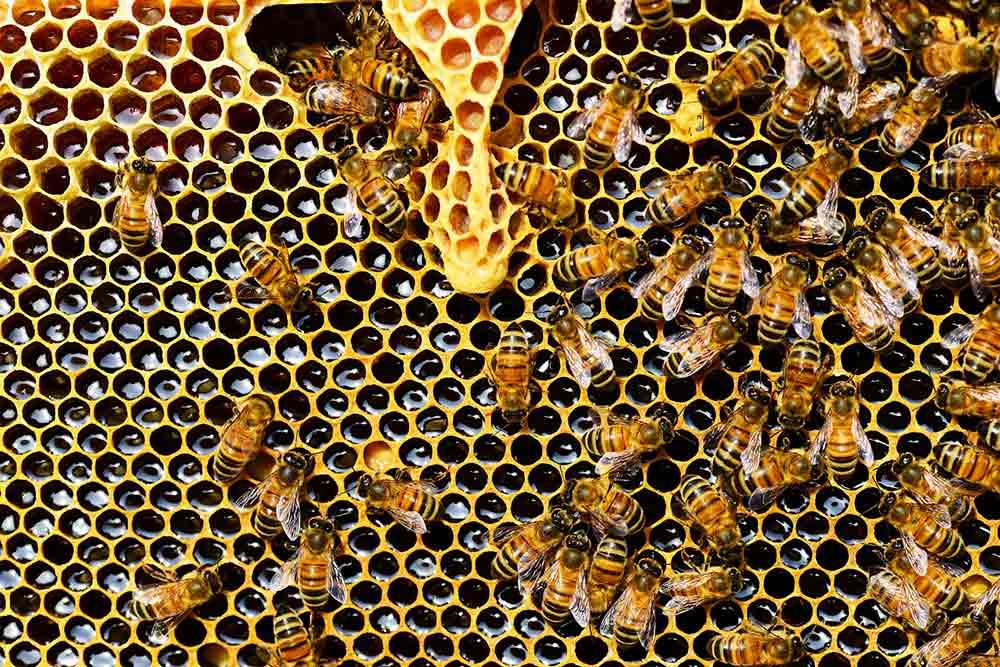 Naturactive Gelée Royale - Abeilles et miel