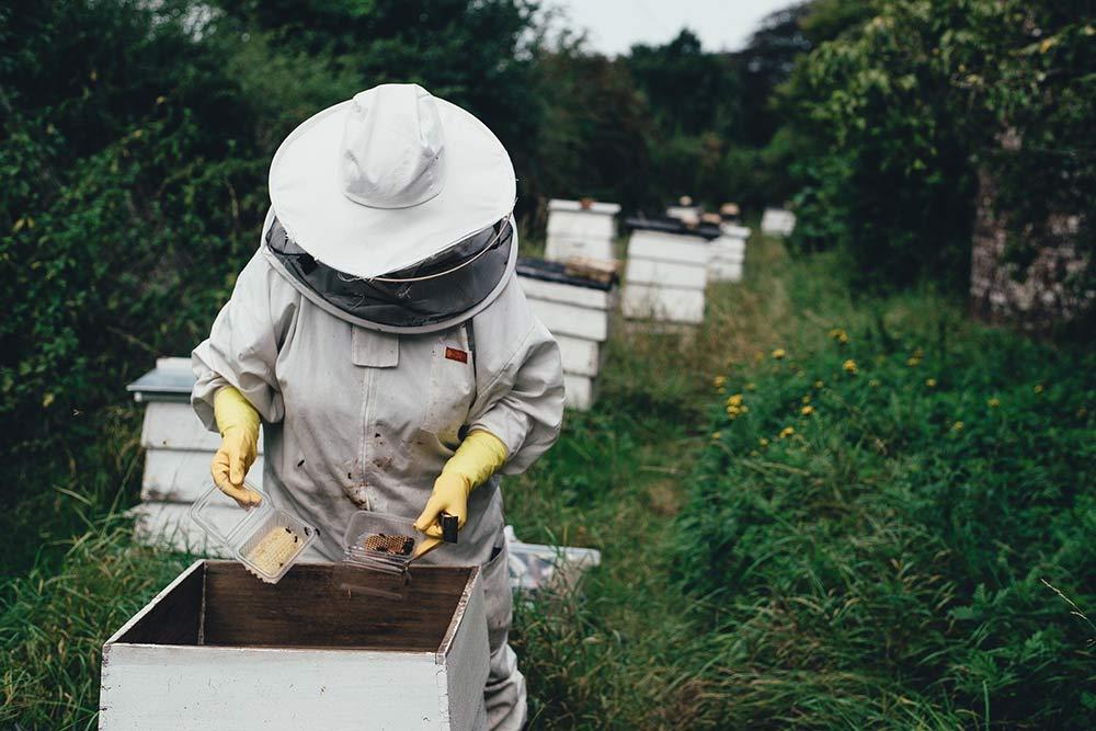 Récolte du Miel par un Apiculteur