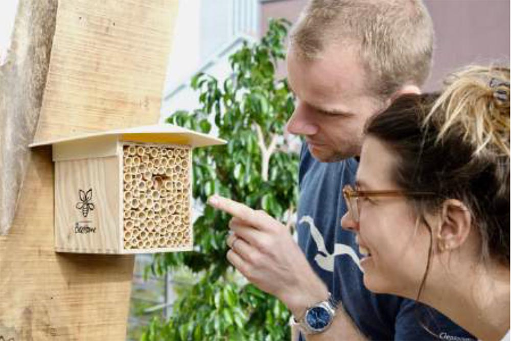 To Bee Or Not To Be - maison abeilles