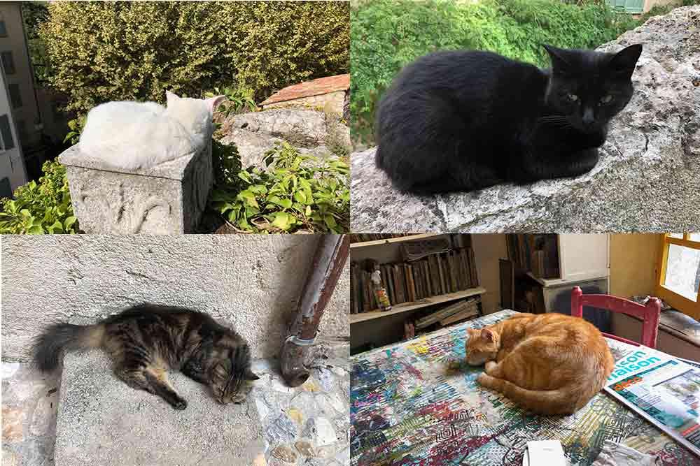 Les chats sont partout dans le village de Seillans