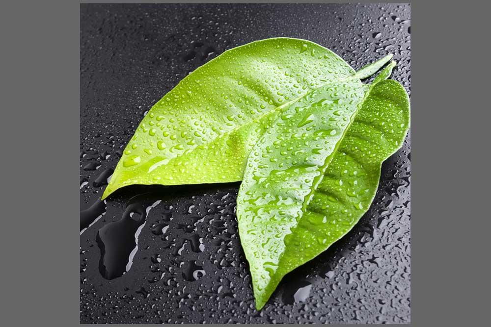 Les extraits de Ginseng et Swertia Japonica,